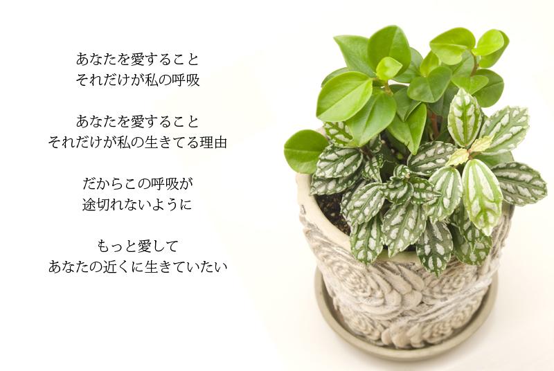 img_l11 (2)
