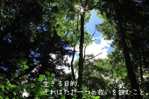 img_l17 (2)