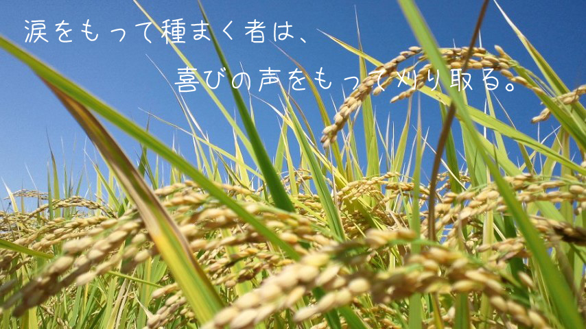 img_l4 (2)