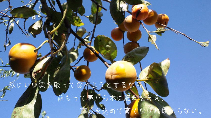 img_l5 (2)