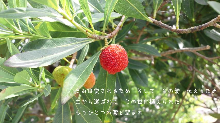 img_l9 (2)