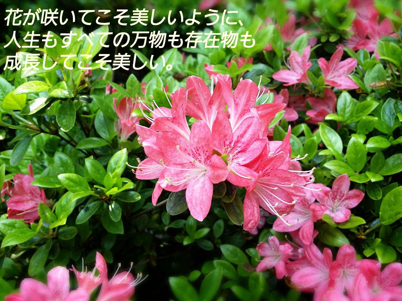 咲いた花 miiho